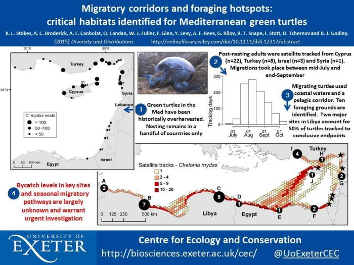 Migratory corridors of green turtles in the Med