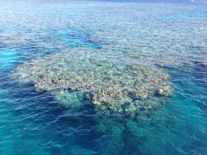 A picture of a shallow coral reef in Australia's Great Barrier Reef
